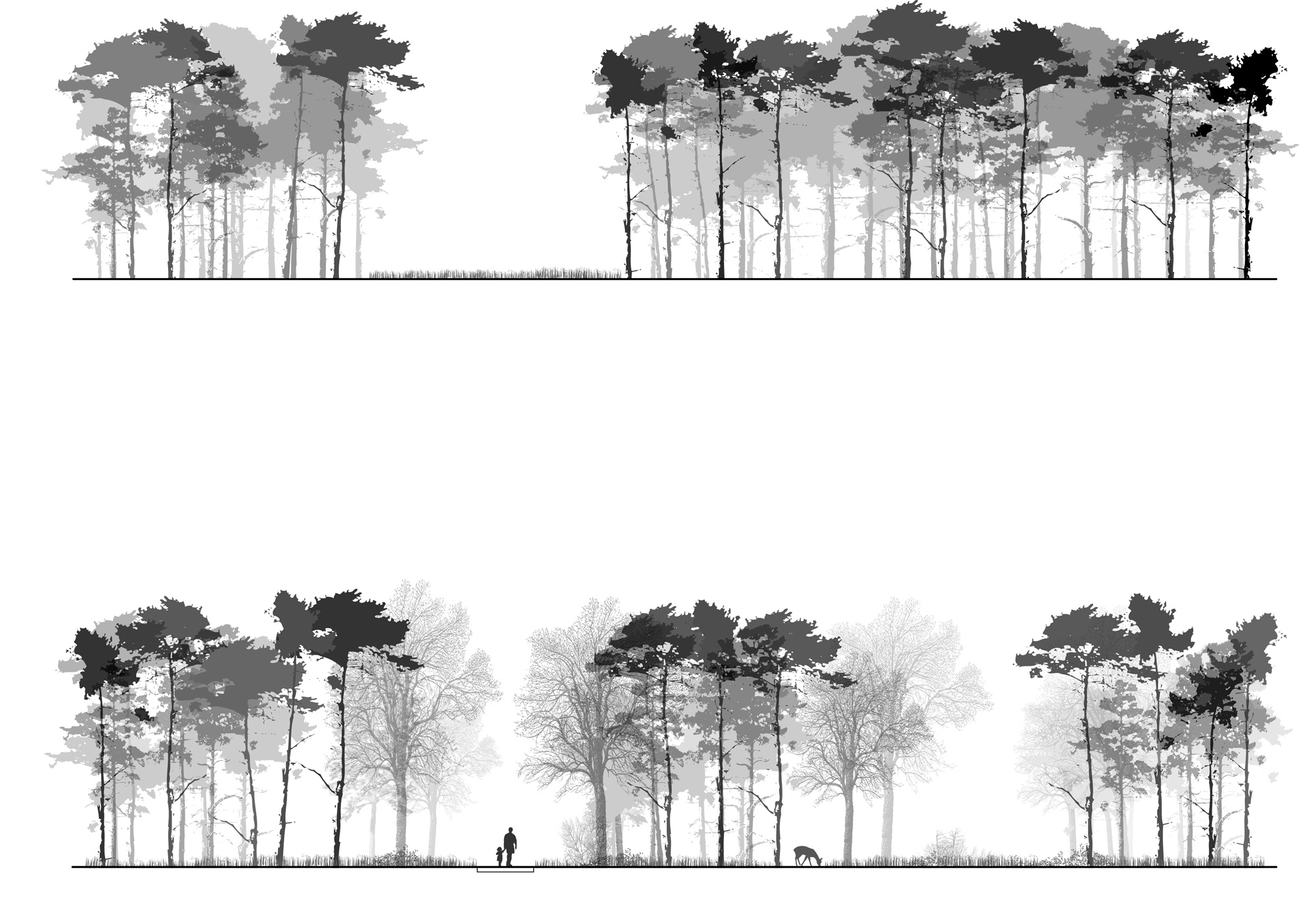 Plan And Elevation Of Trees : Lanscape park disposal project delva landscape